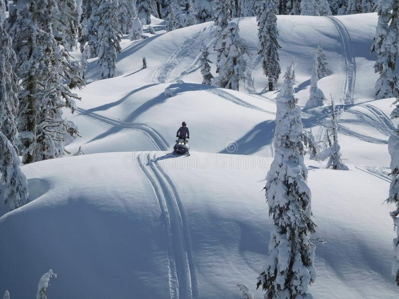 Person Riding Snowmobile Near Green Trees Covered With Snow at Daytime royalty free stock images