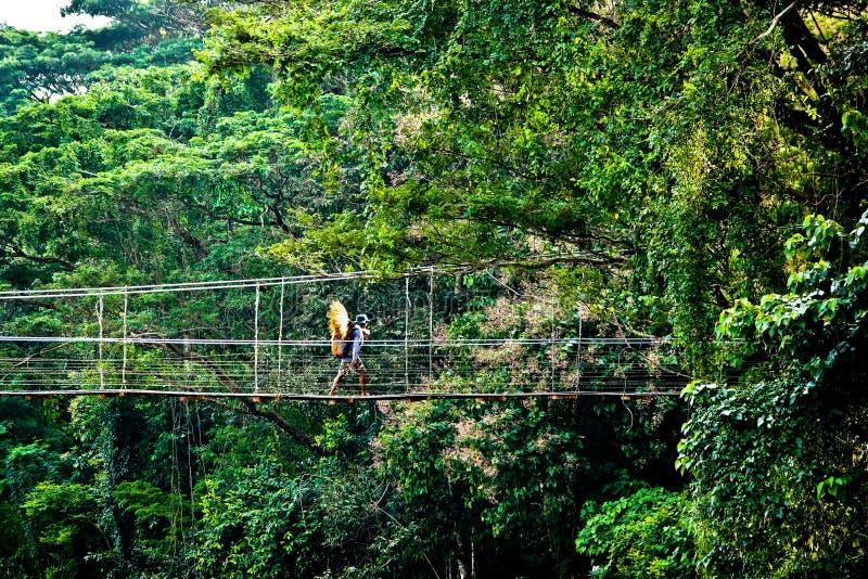 Person on rope bridge in jungle