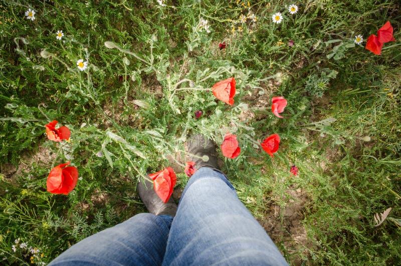 Person& x27;s benen omringd door poppies royalty-vrije stock fotografie