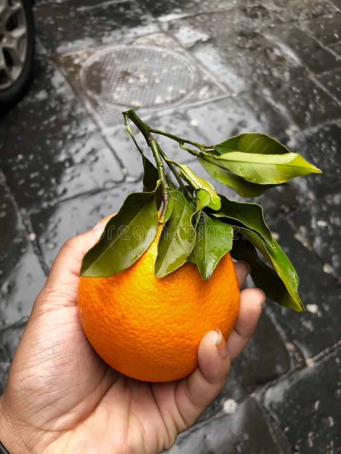 Person's Hand Holding Orange Fruit stock images