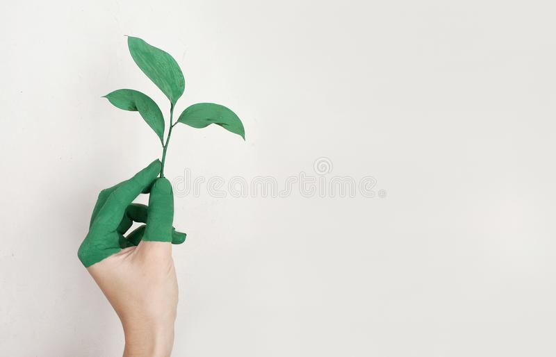 Person's Left Hand Holding Green Leaf Plant stock images