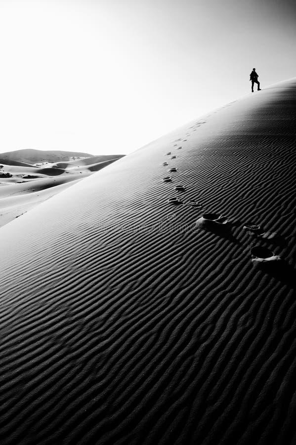 Person som överst står av en hög sanddyn i Sahara, Marocko royaltyfri fotografi