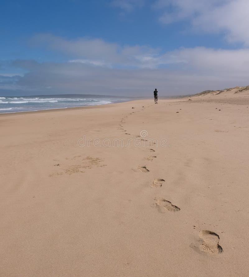 Person som går i avståndet på den sandiga stranden på strandskataslingan, nära den Mossel fjärden, trädgårdrutt, Sydafrika arkivfoto