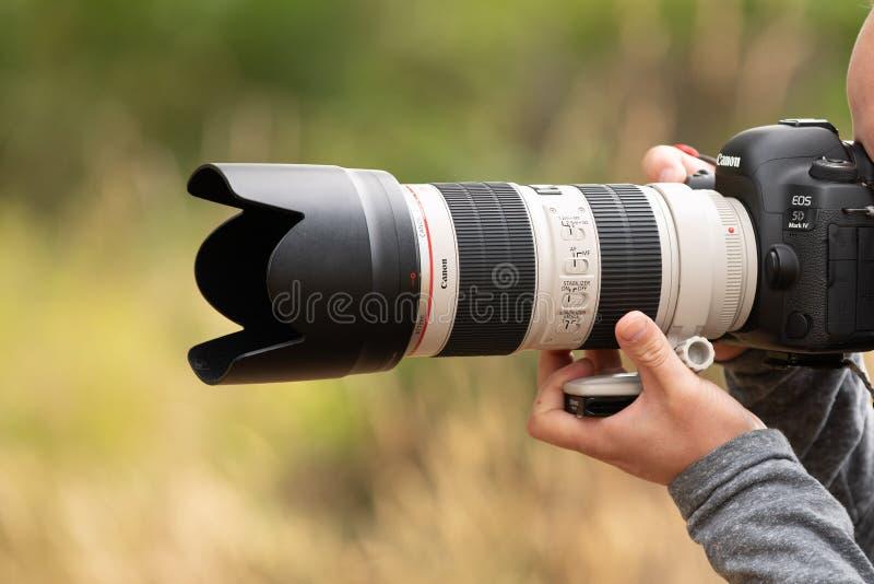 Person som tar fotoet med den 70-200mm linsen på den Canon kameran royaltyfria bilder