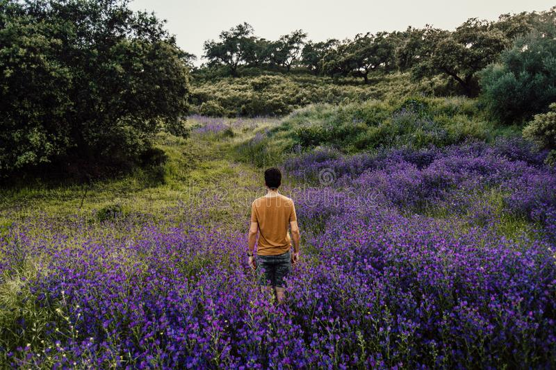 Person Standing on Bed of Lavender Flowers stock photography
