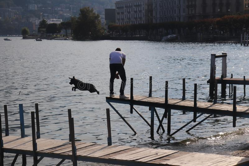 Person standing on a dock while his dog is jumping in the water at daytime. A person standing on a dock while his dog is jumping in the water at daytime stock photos