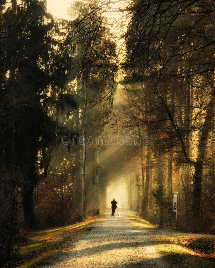 Person Standing on Pathway Surrounded by Trees royalty free stock photography