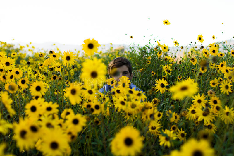 Person In Sunflower Field During Daytime Free Public Domain Cc0 Image