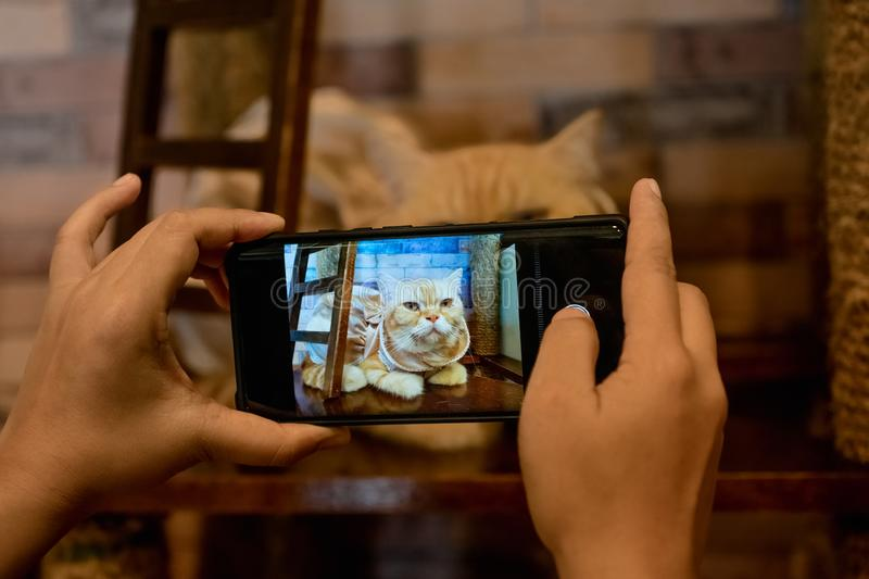 A person take a picture of a cat with her mobile phone. How to photograph animal using smartphone concept background stock images