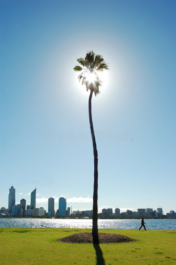 Person on walk among palm tree and river cityline royalty free stock photography