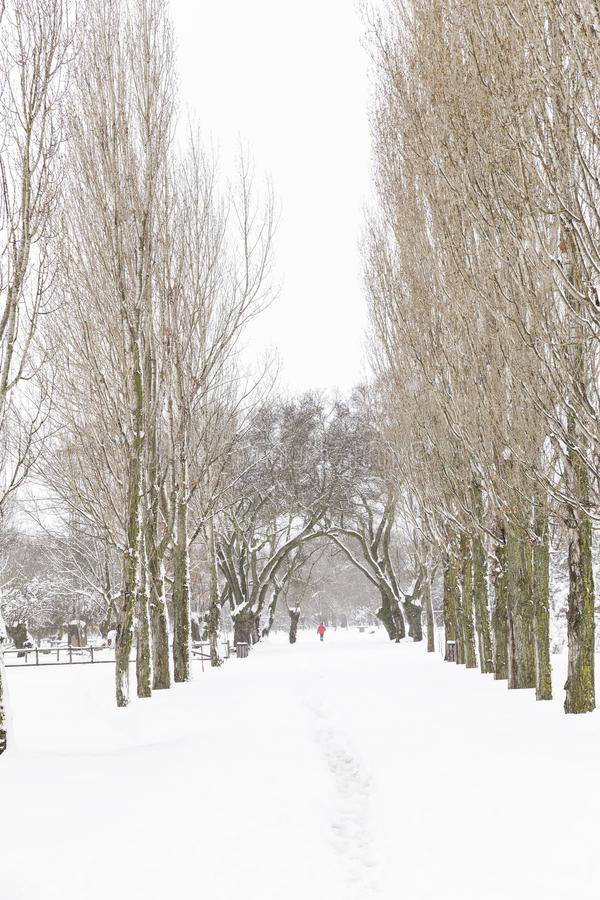 Person walking on a gray day in a lonely and snowy park royalty free stock images