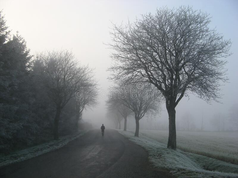 Person Walking on Road Between Trees stock photography