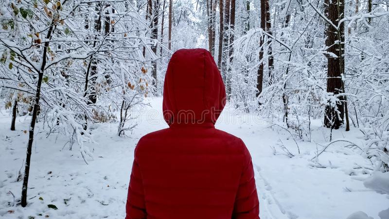 Person walking in snow covered forest, enjoying winter nature beauty, back view. Stock photo royalty free stock photo