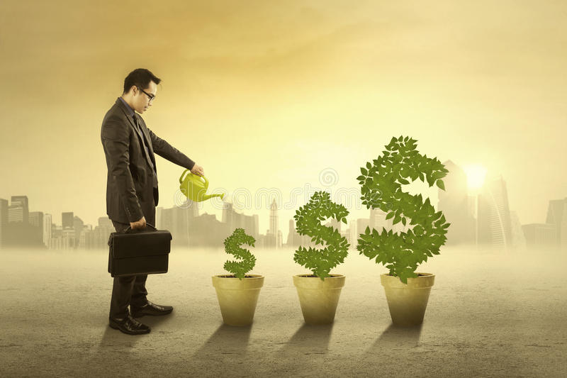 Person watering money tree outdoors stock photos
