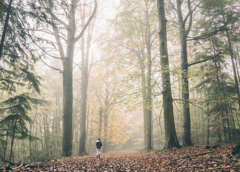 Person Wearing Black Jacket Walking In The Forest Free Public Domain Cc0 Image