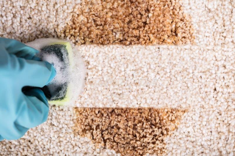 Person Wearing Gloves Cleaning Stain av matta fotografering för bildbyråer