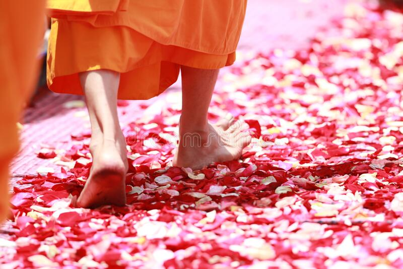 Person Wearing Orange Dress Walking On Petals During Daytime Free Public Domain Cc0 Image