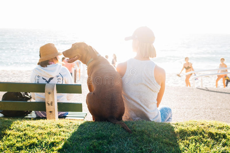 Person Wearing White Tank Top Sitting Beside The Brown Labrador Near Seashore