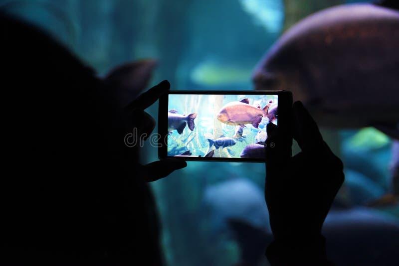 Persona che tiene un cellulare che prende un'immagine in un acquario durante il viaggio culturale immagine stock libera da diritti
