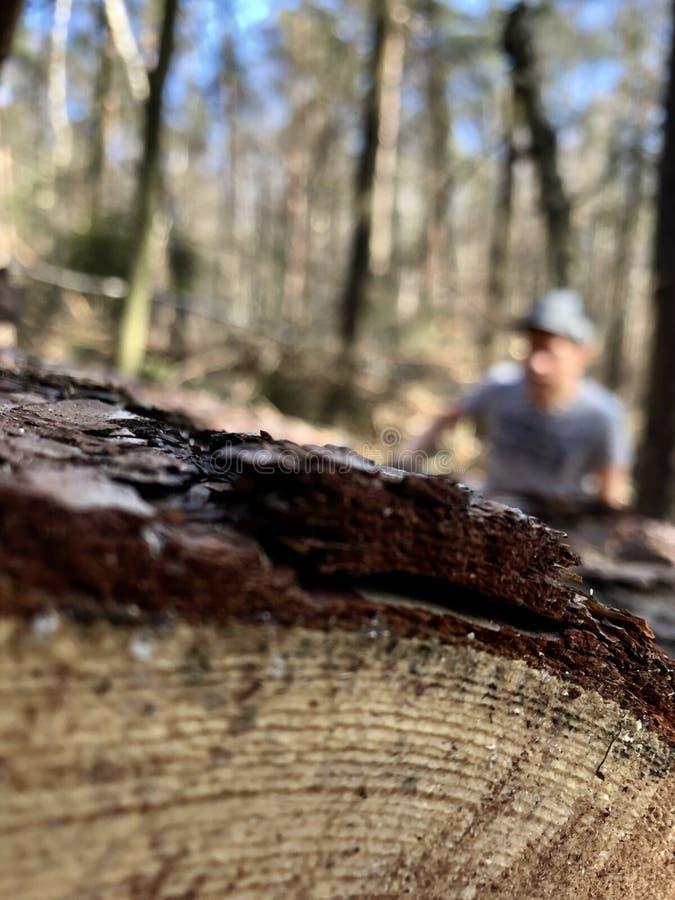 Persona Defocused que sube en pinos en el bosque foto de archivo