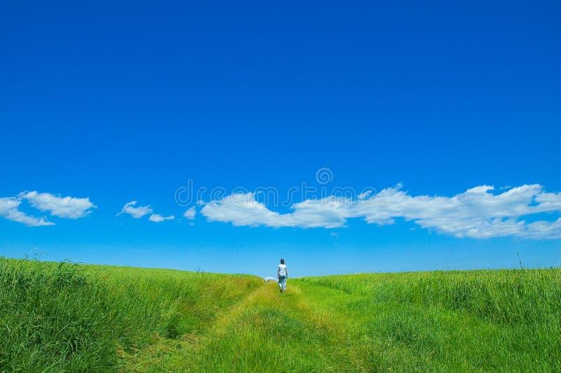 Persona nel campo verde 3 fotografia stock