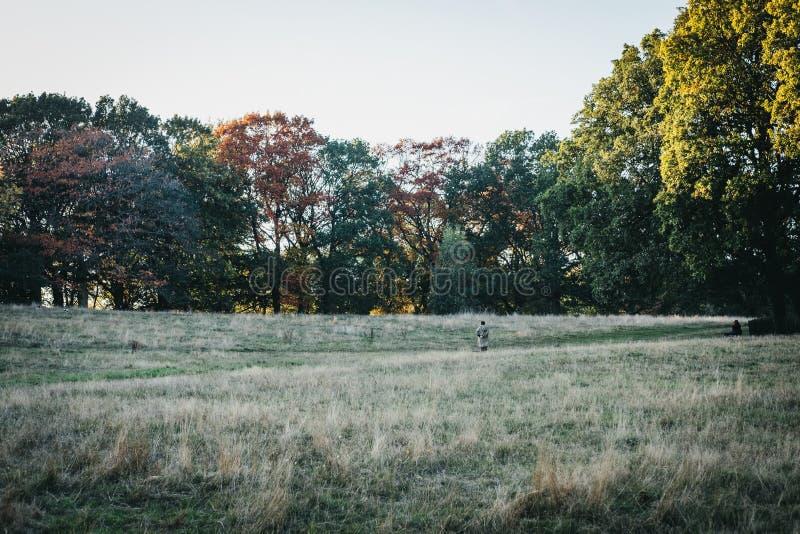 Persona que camina a través del campo en Hampstead Heath en la oscuridad, Lon fotografía de archivo