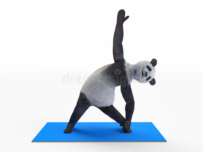 Personage character animal bear panda yoga stretching exercises different postures and asanas. Sports pre-workout warm-up demonstrated by biped orthograde panda stock illustration