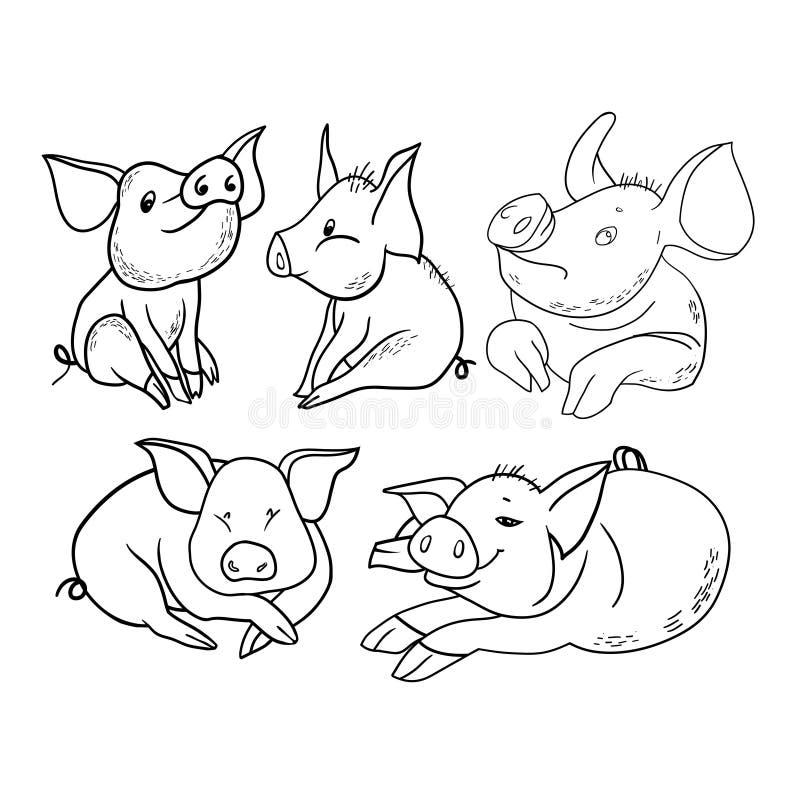 Personagem de banda desenhada do humor, porco bonito ilustração do vetor