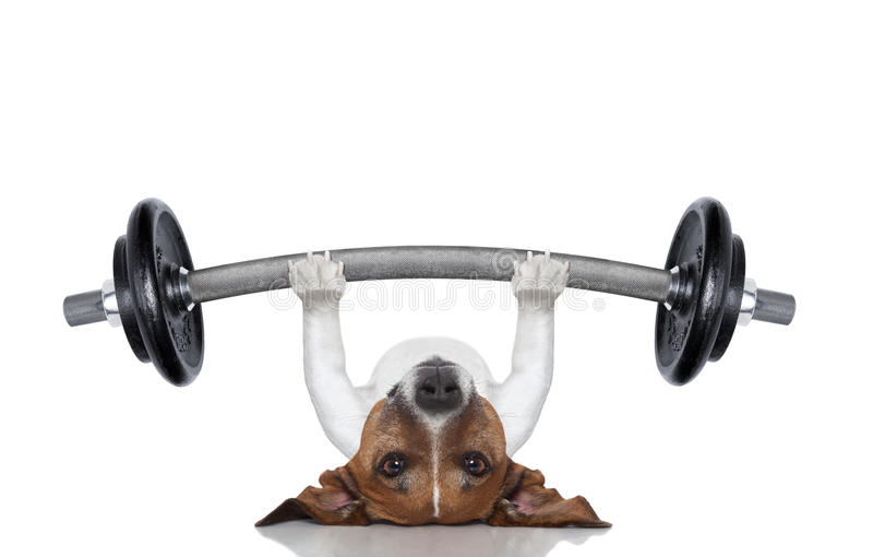 Personal trainer dog royalty free stock image