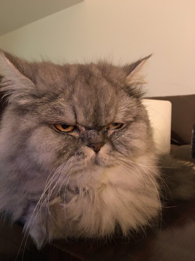 Personalidade do gato fotos de stock royalty free