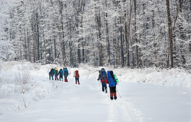 Personas de caminantes en montañas del invierno imagen de archivo libre de regalías