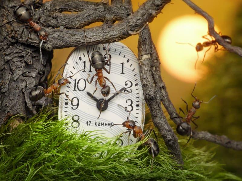 Personas de las hormigas que ajustan tiempo en el reloj imagen de archivo