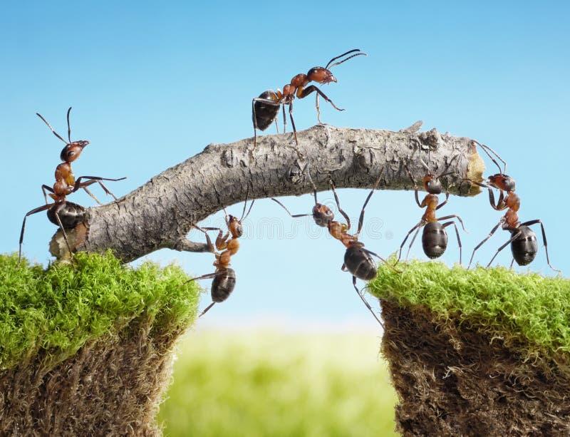 Personas de las hormigas que construyen el puente, trabajo en equipo imágenes de archivo libres de regalías