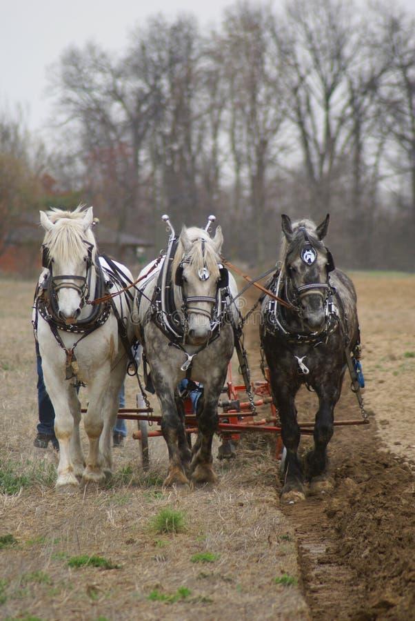 Personas del arado de tres caballos foto de archivo libre de regalías