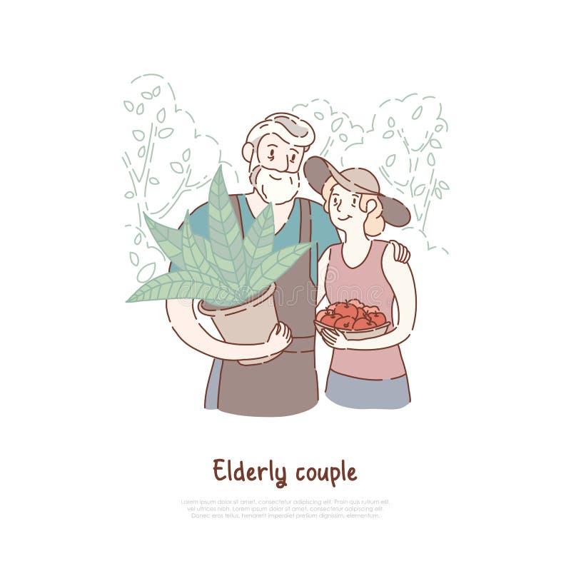 Personas mayores felices, pares de los jardineros plantando las frutas y verduras, mujer que sostiene las manzanas frescas, forma stock de ilustración