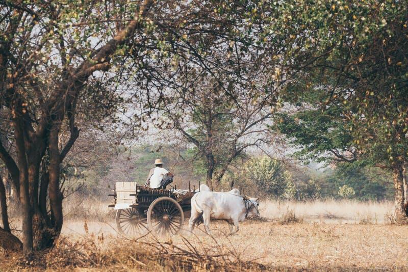 Personenvervoer oude houten die kar door een witte buffel op het plattelandsgebied van Bagan, Myanmar wordt gedreven royalty-vrije stock foto