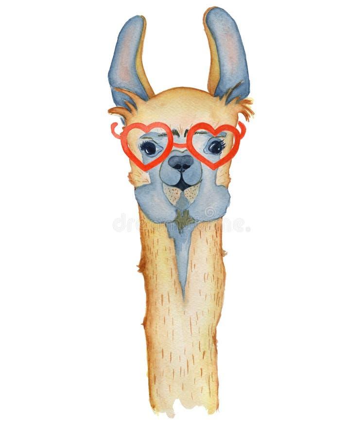 Personnage de dessin animé mignon de lama avec l'illustration rouge d'aquarelle en verre, animal d'alpaga, style tiré par la main illustration de vecteur