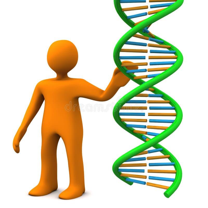 ADN de mannequin illustration de vecteur