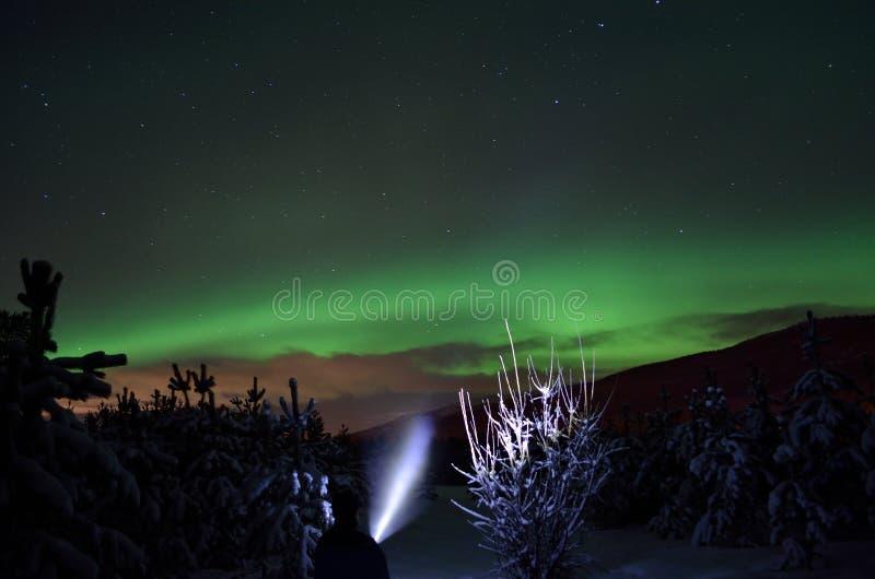 Personne dirigeant le faisceau de lampe-torche vers l'aurora borealis sur le ciel nocturne d'hiver dans l'arbre impeccable images libres de droits