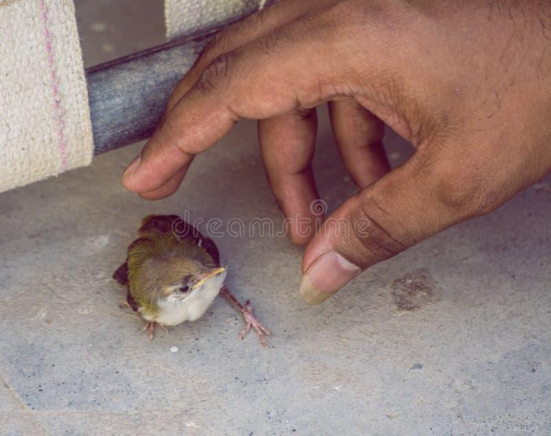 Personne environ pour attraper Trailorbird effrayé image libre de droits