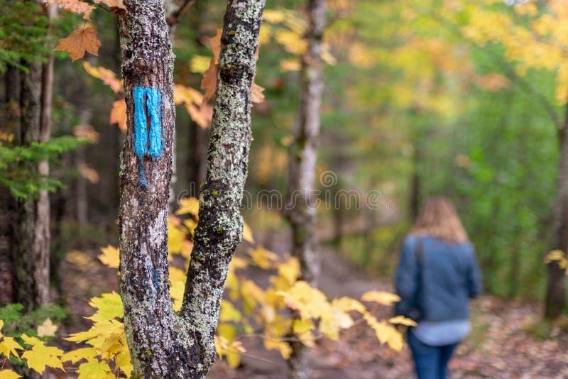 Personne marchant en bois en automne le long de traînée marquée images stock