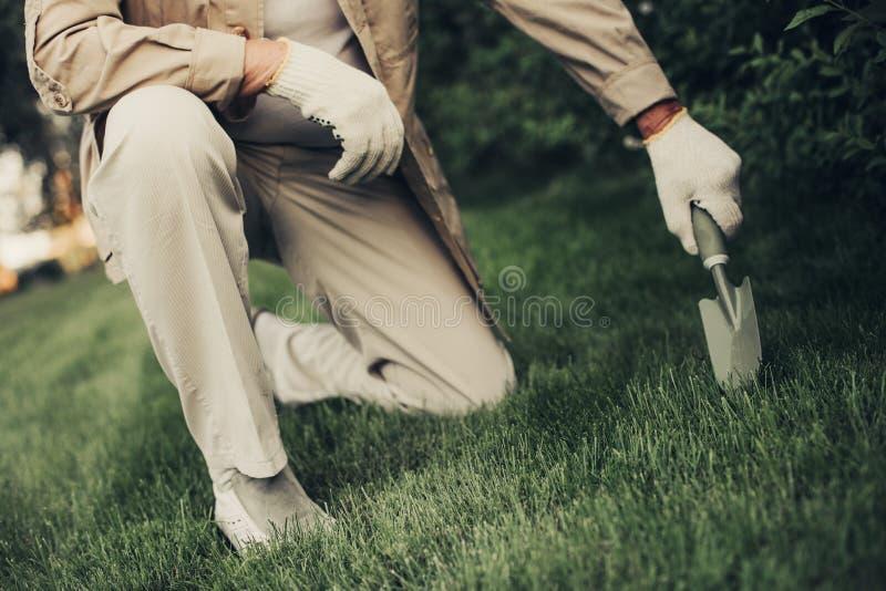 Personne masculine kneeing près de l'arbuste vert frais photographie stock