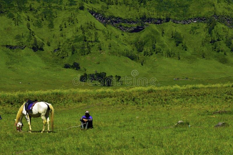 Personnes d'Unreconized Vue scénique de champ d'herbe verte des champs de roulement de ferme de vert de campagne avec le cheval photo stock
