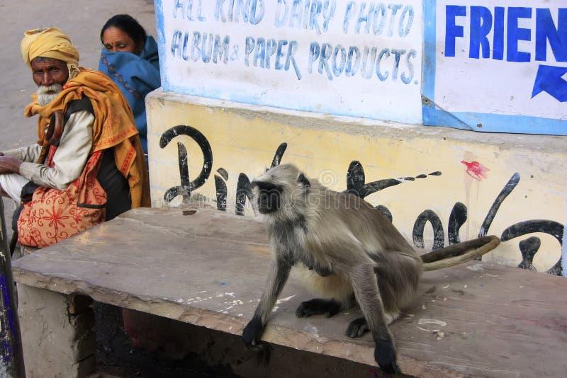 Personnes locales et langur gris se reposant dans la rue, Pushkar, Ind image libre de droits