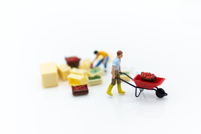 Personnes miniatures : Moisson de jardiniers des cultures agricoles Utilisation d'image pour le transport, logistique, concept de photo stock