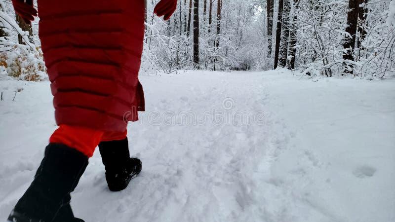 Persoon die die in bos lopen met sneeuw wordt behandeld, die van aard, de wintersprookjesland genieten stock foto