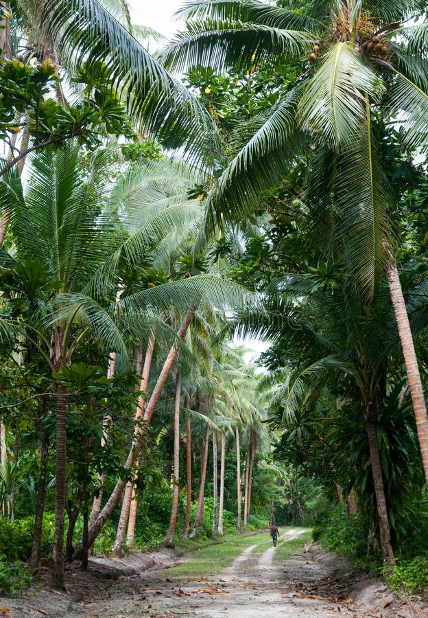 Persoon die onderaan een wildernisweg lopen, Santa Ana Island, Solomon Islands royalty-vrije stock foto's