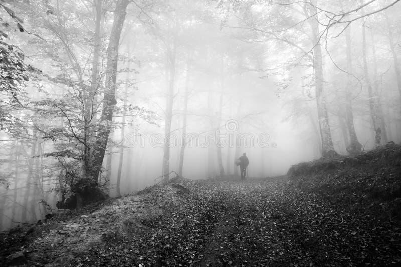 Persoonspaddestoel de jacht in bos in de ochtend stock afbeelding
