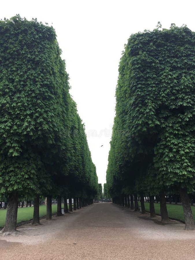 Perspectief in groen royalty-vrije stock fotografie