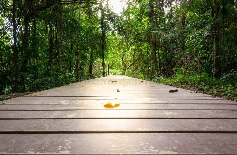 Perspectief van houten brug binnen diep stock afbeeldingen